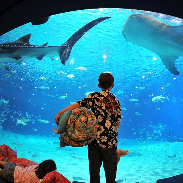 "<span class=""atmosphere-large-text"">Aug 4-5</span><span class=""intro"">Georgia Aquarium Sleepover</span>"