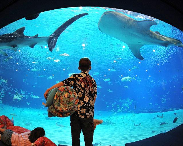 """<span class=""""atmosphere-large-text"""">Nov 19-20</span><span class=""""intro"""">Georgia Aquarium Sleepover</span>"""